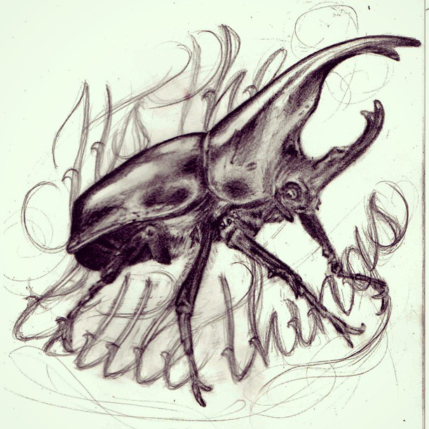Drawing graphite beetle
